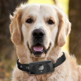 Scout5000 – inteligentna obroża jak smartfon z kamerką dla psa