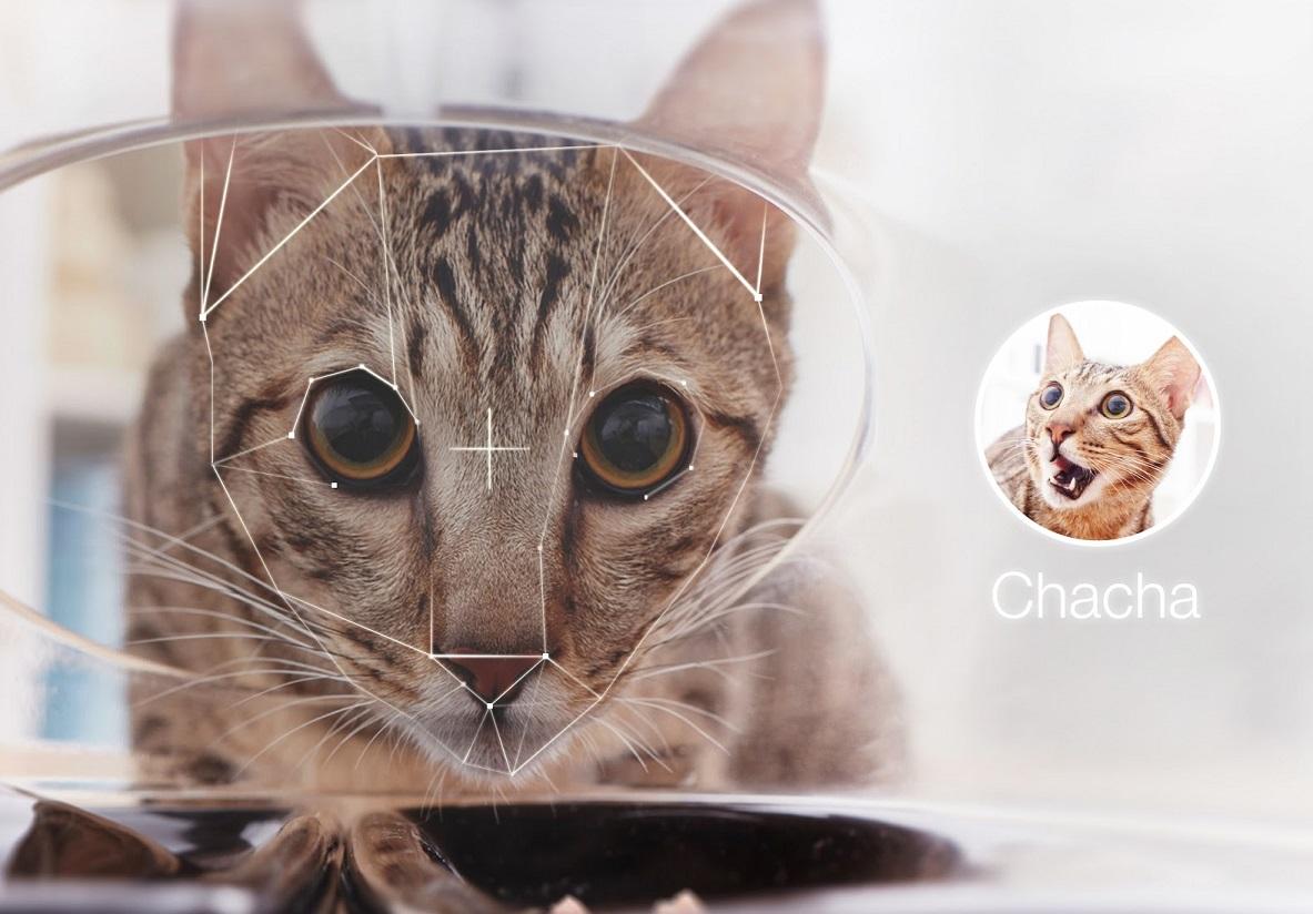 CatFi Cat Facial Recognition