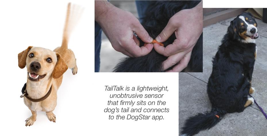 dogstar tailtalk