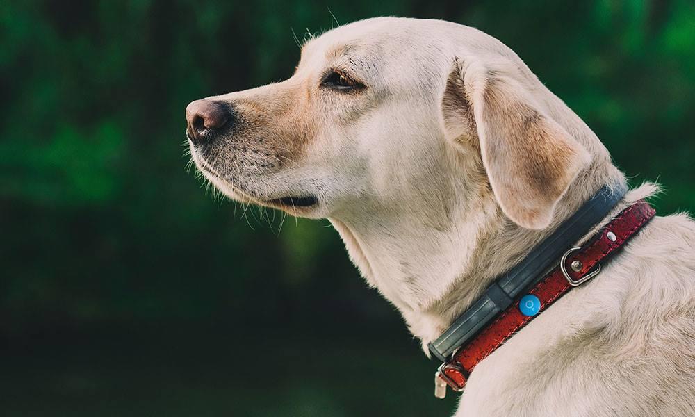 Respot dog