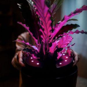 Glowce