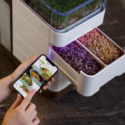 Cell One Microgreens