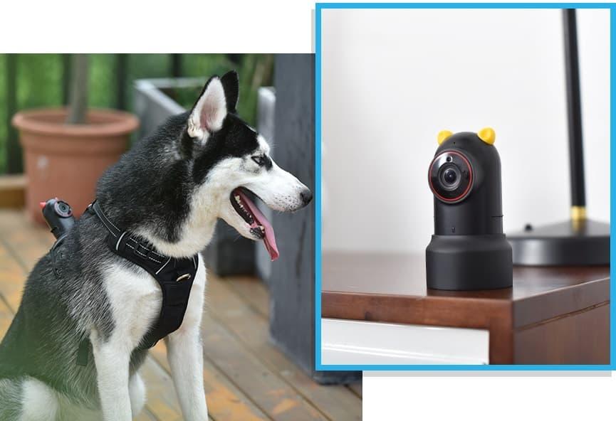 PetNow kamerka na psa