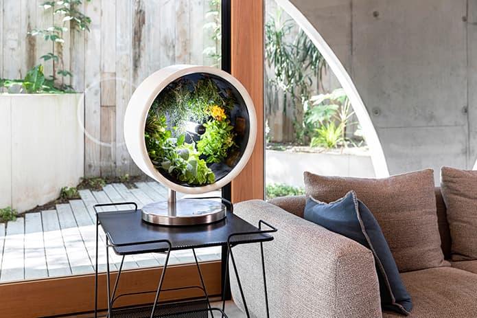 Rotofarm microgreens ogródek